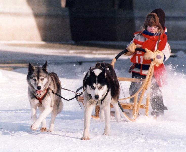 Festival du Voyageur - St. Boniface - Winnipeg Region - Destinations - Joie de Vivre - dog sled