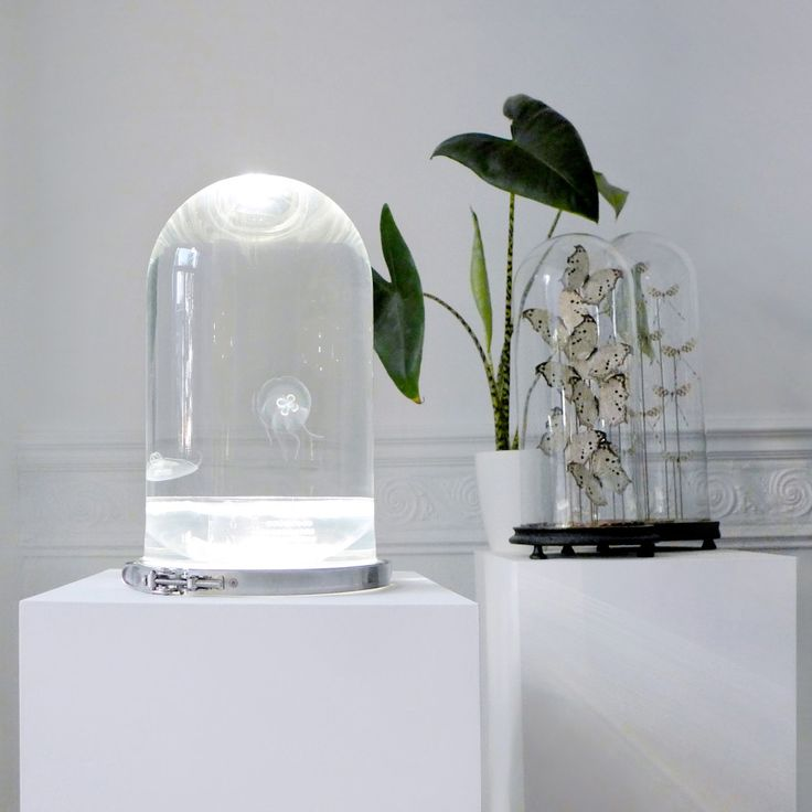 This for a space: Jellyfish! The Darwin Aquarium // Design Milk