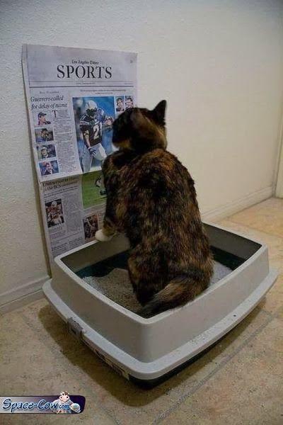 funny cat humor image