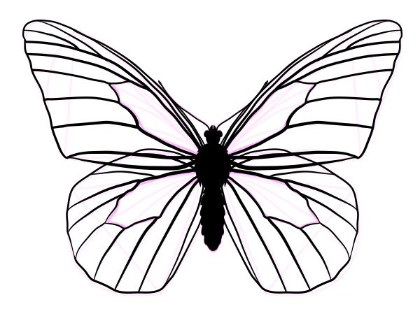 How to Draw Animals: Butterflies, Their Anatomy and Wing Patterns ...