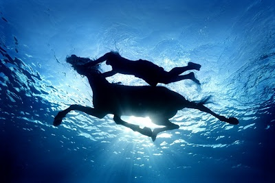CABALLO EN EL AGUA: Underwater Photos, Buckets Lists, Horses, The Ocean, Swim, Underwater Photography, Zena Holloway, Zenaholloway, Animal