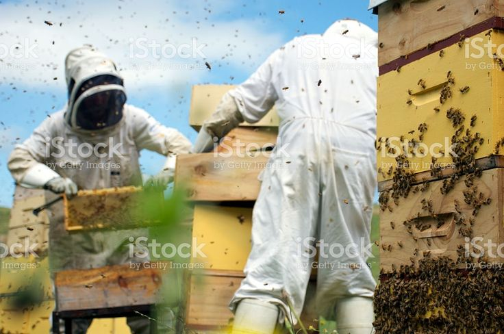 Commercial Apiarists at Work royalty-free stock photo
