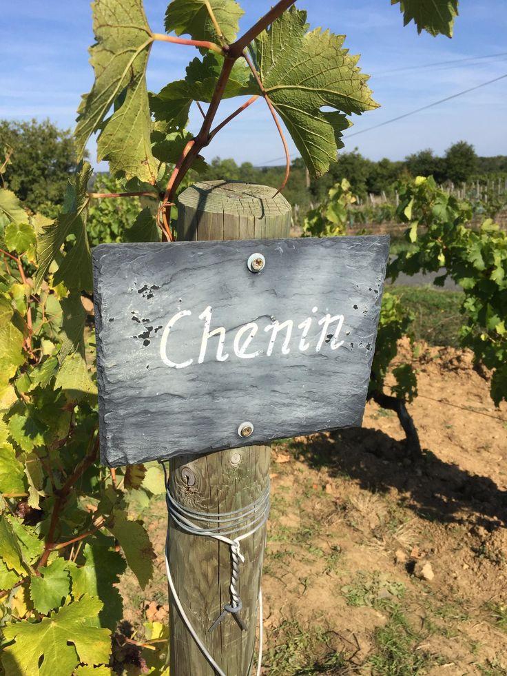 Musée de la Vigne et du Vin à Saint Lambert du Lattay. Visite des vignobles.