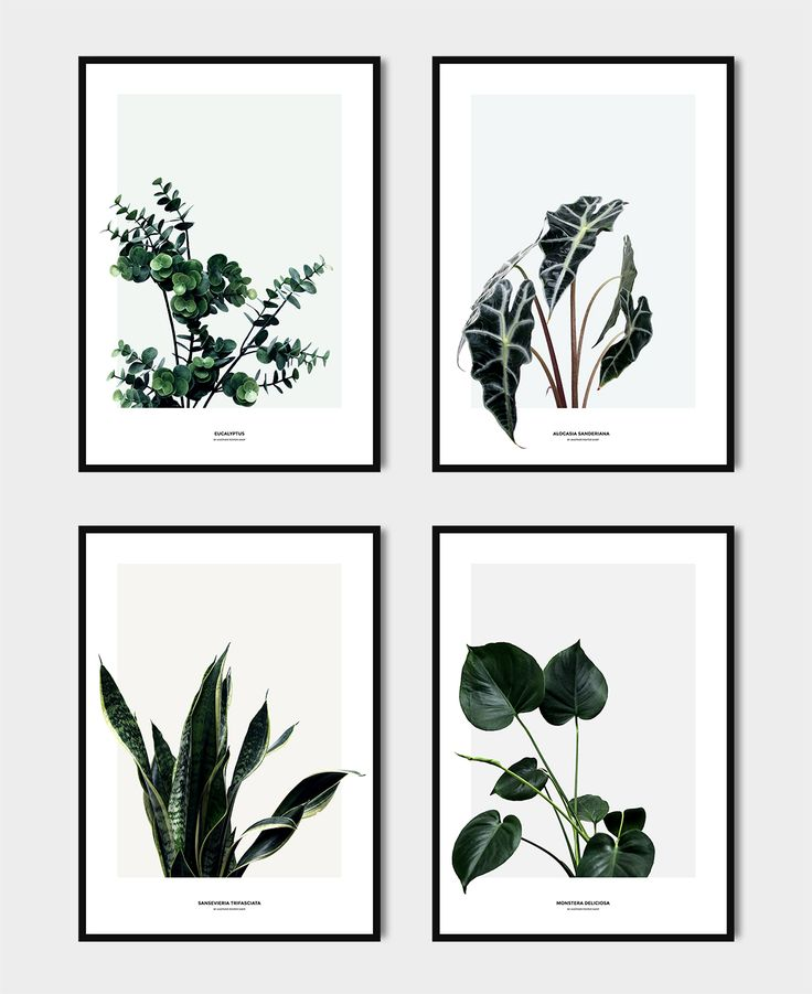 Plante plakater (plant posters) - Another Poster Shop - Katarina Natalie