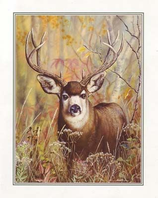 Buck In Forest (*)