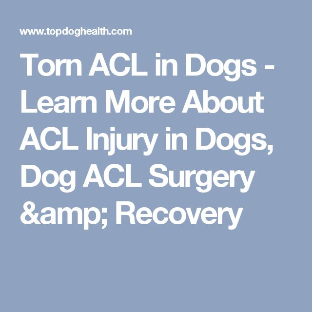 Torn ACL in Dogs - Learn More About ACL Injury in Dogs, Dog ACL Surgery & Recovery