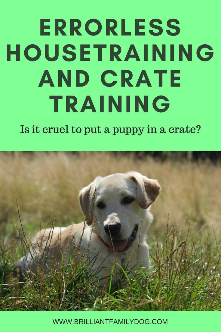 Use the crate kindly to help you housetrain your puppy in a couple of weeks.