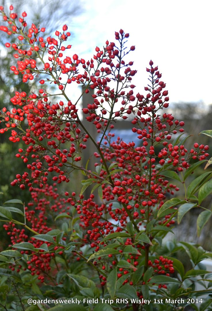 Never underestimate a plant that provides spring berries