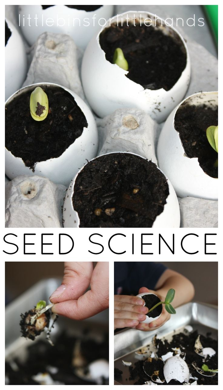 Egg Shell Seed Growing Science Experiment
