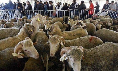 Pétition : Non à l'abattoir provisoire halal à Belfort ! Non à l'utilisation de…