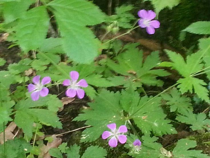 Blommor i Hågaby
