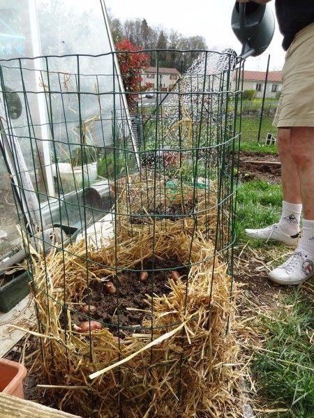 1000 id es sur le th me planter pomme de terre sur - Planter des patates ...