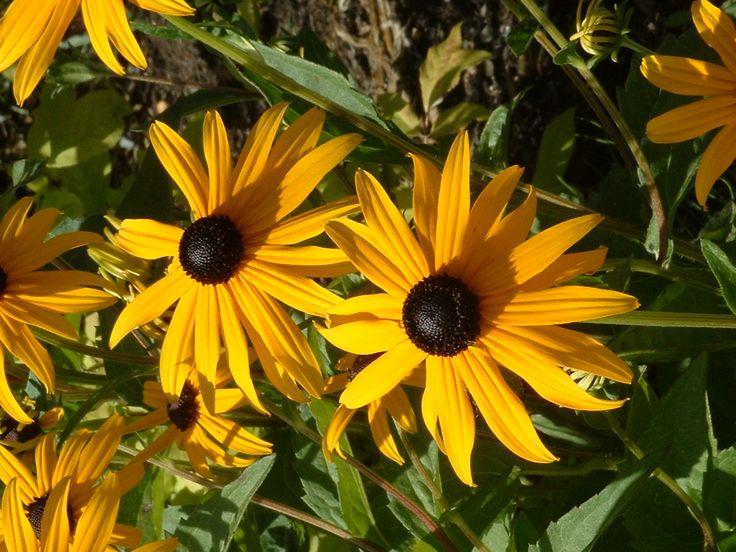 Fleurs au Domaine de Maizerets
