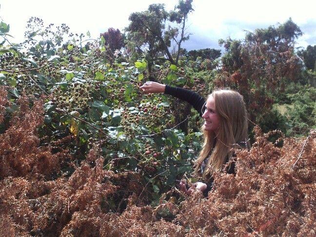 Picking blackberrys