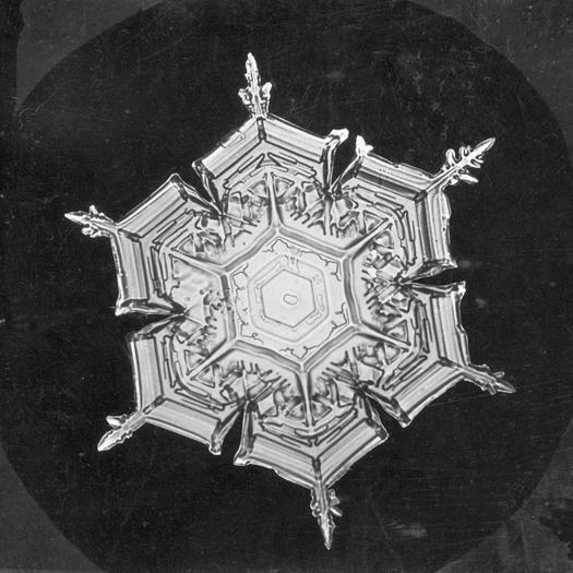 Snowflakes under an electron microscope on Pinterest | Snowflakes ...