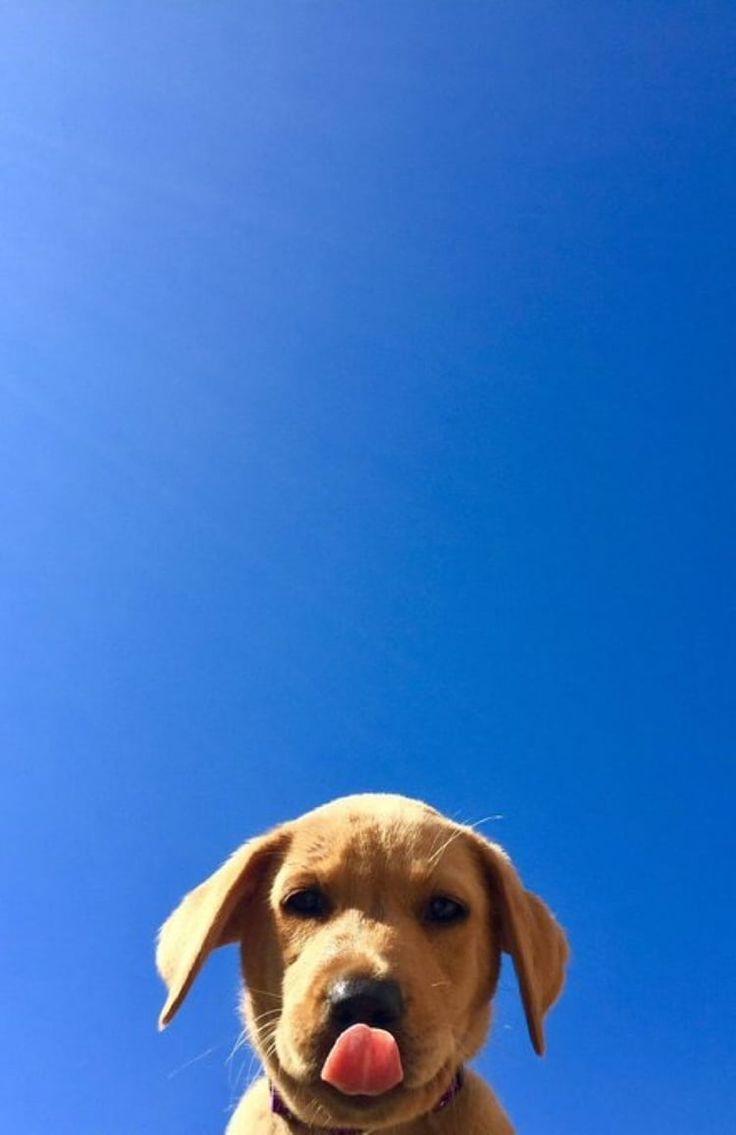 Love Sky Puppy Animal Cute Dog Mit Bildern Niedliche