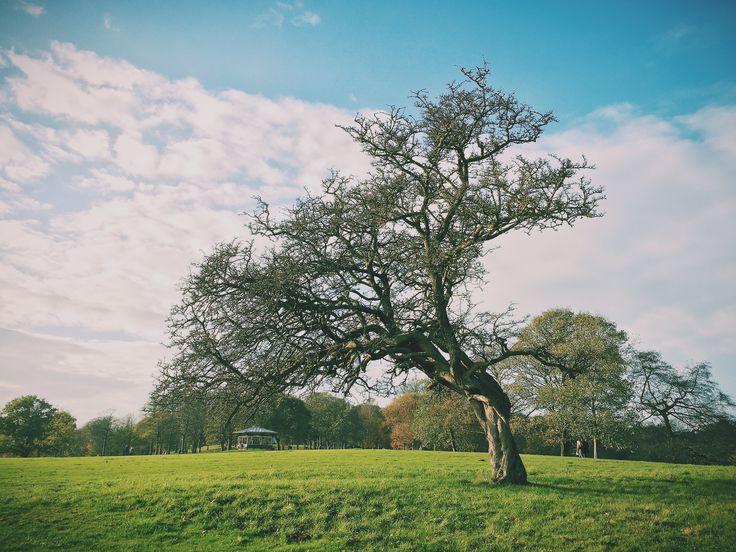 Roundhay Park in Leeds