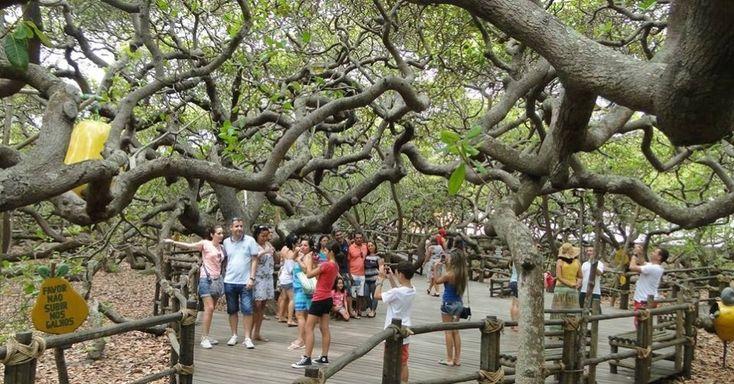 Natal, a capital do Rio Grande do Norte é um dos principais destinos turísticos do Brasil. O que não é de se espantar devido as suas belezas naturais, suas praias, dunas, falésias, coqueiros, mar calmo e de águas cristalinas. Saiba o que fazer em Natal no Rio Grande do Norte, a cidade do sol. Reserve …