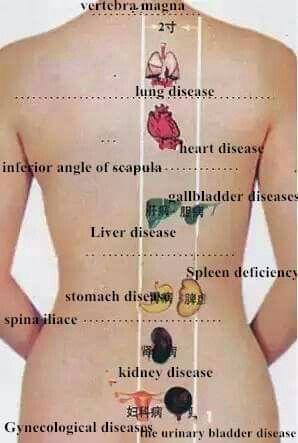 척추와장부
