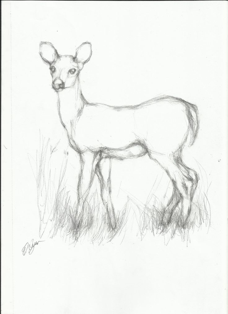 Line Art Drawings Of Animals : Simple line drawings of deer google search integrating