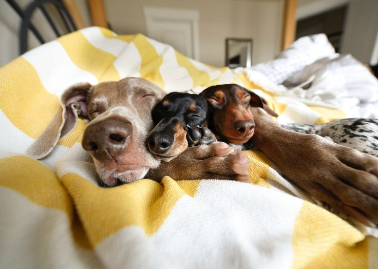 Harlow, Cute Little Reese & Indiana Nap-time