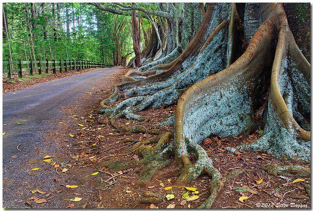 Hundred Acres Reserve, Norfolk Island