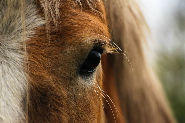A ló igen hamar az emberek környezetében háziasított körülmények között élt, ma már a vadlovak nagyon kevés lélekszámmal élnek bolygónkon. Mindig is a szabadság jelképének tekinthettük őket, száguldhatunk a hátán és élvezzük a prérik, a csodaszép legelők vidékeit.   #ló #lovaglás #sport