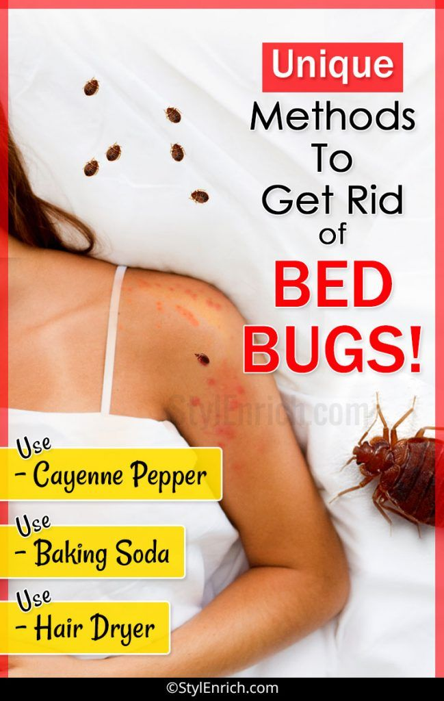 How To Get Rid Of Bed Bugs Let S See Unique Methods Rid Of