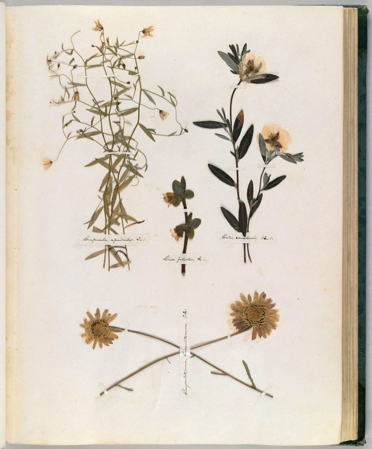 Lovely Emily Dickinson us Herbarium A Forgotten Treasure at the Intersection of Science and Poetry