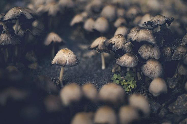 Pochuvstvui vesnu - Miagkie fotografii ot Rachel Belinski
