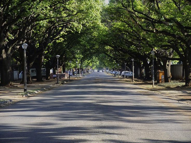This oak avenue was planted in about 1910 and lends to the streets along which it is situated both dignity and aesthetic character. Type of site: Avenue, Tree. This oak avenue was planted in about 1910 and lends to the streets along which it is situated both dignity and aesthetic character.