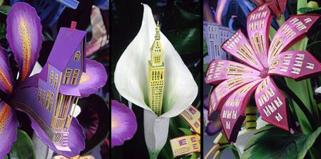 architecturalflowers01Architectural Flowers by James Grashow