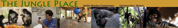 The Jungle Place Spider Monkey Sanctuary - Quintana Roo, Mexico