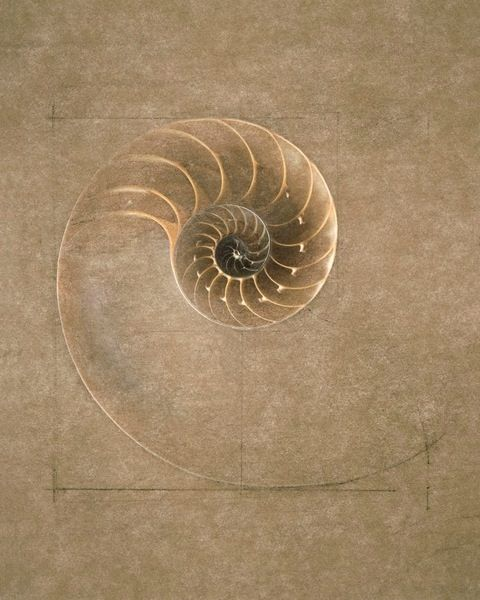 Golden mean fibonacci spiral nautilus