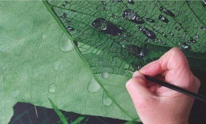 How to Paint Raindrops on a Leaf in Watercolour   Features   Painters Online