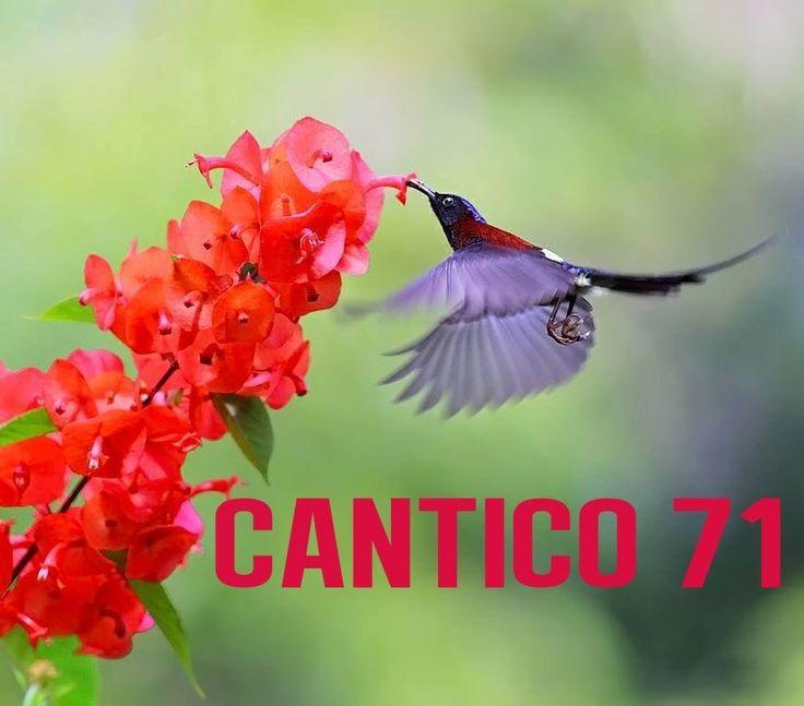 CÂNTICO 71 (NOVO ARRANJO)   ESPIRITO SANTO -DADIVA DE DEUS                                                                                                                                                      Mais