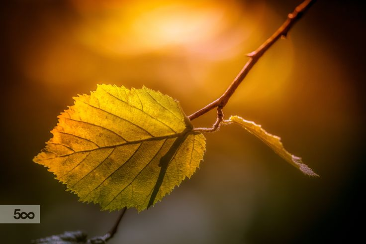 Leaf and Light by Olivier Ferrari on 500px