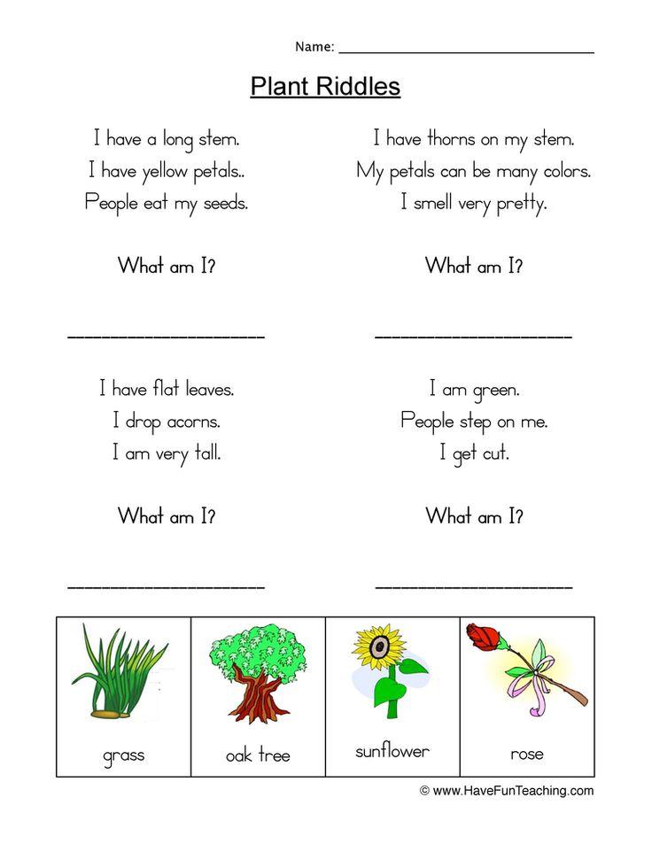 Plants Worksheets   Plants worksheets, Plant life cycle ...