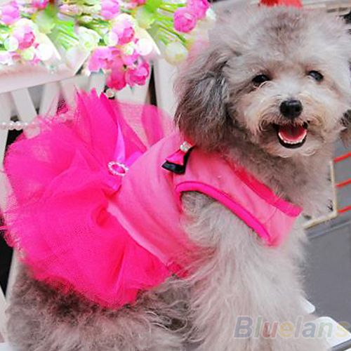 Cheap Dog Clothes and Accessories | Bow Crystal Belt Small Pet Dog Cat Clothes Clothing and Accessories ... aliexpress.com