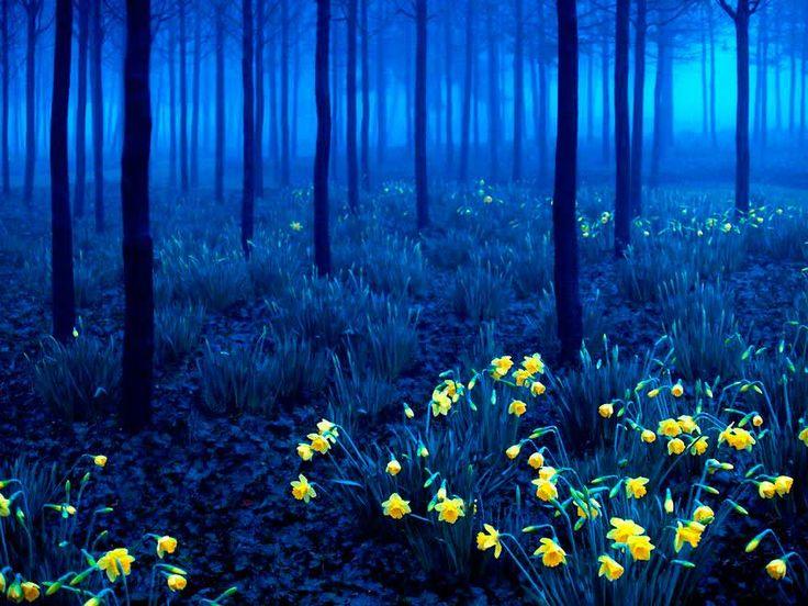 17 increíbles lugares que no creerás que existen - Bosque Negro, Alemania