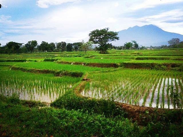 View Matesih village Karanganyar - Central Java.