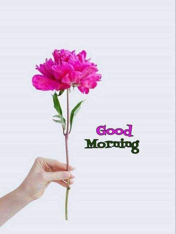 صور رمزيات صباح الخير حبيبي بالانجليزي صور عالية الجودة Morning Greetings Quotes Good Morning Flowers Good Morning Messages