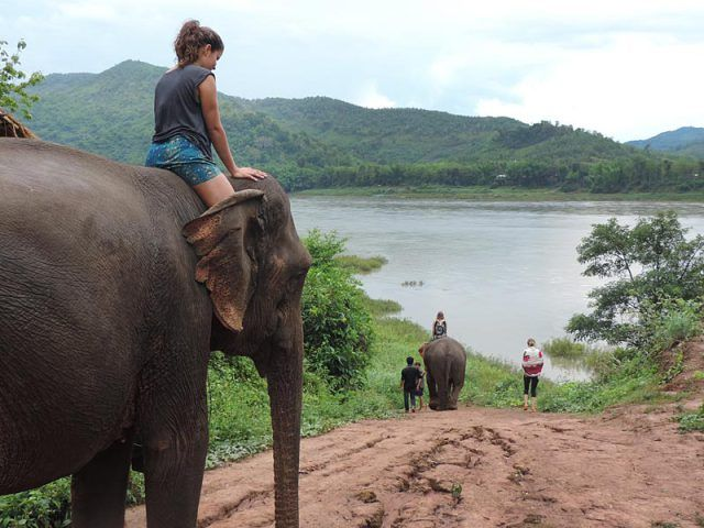 Andar de elefante no Laos . Sexy Woman riding bareback barefoot on an Elephant .