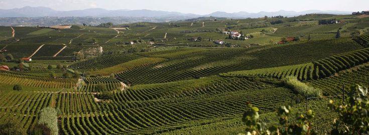 L'Alto Monferrato: Acqui Terme | Terredavino