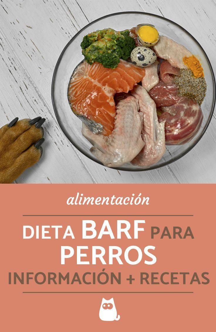 Dieta Barf Para Perros Ingredientes Cantidades Y 5 Recetas Alimento Casero Para Perros Dieta Barf Perros Alimento Perros