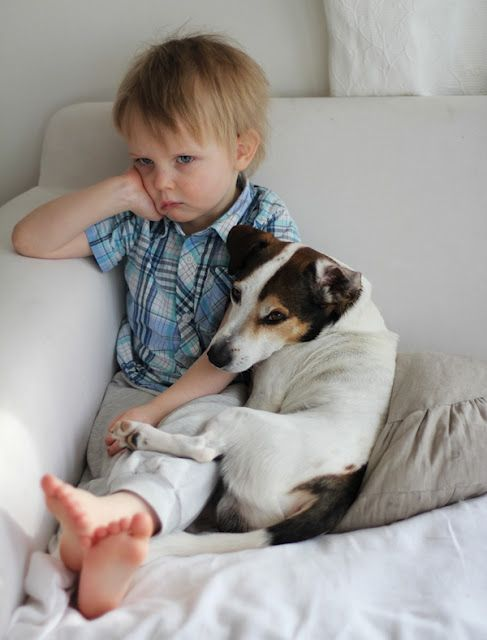 dog comfort in troubled times LOL! #jackrussell