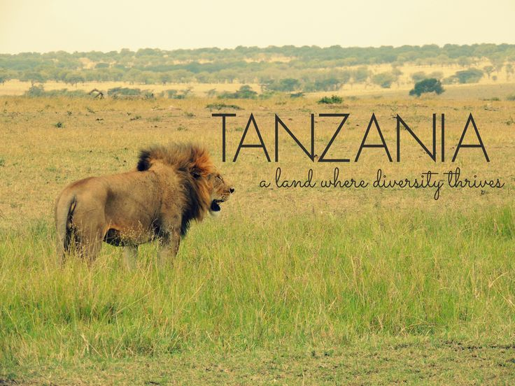 Tanzania: A Land Where Diversity Thrives via The Wandering Soles