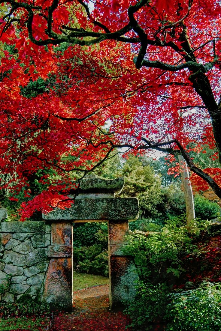 I want my garden to look like this.  Is that too much to ask? Japanese Garden-Biddulph Grange