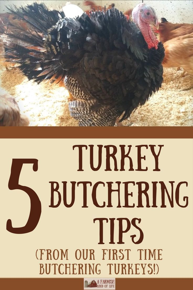 After our first time butchering turkeys, I've come up with five turkey butchering tips to share. And all of them focus on one thing: turkeys. are. big.