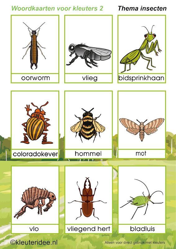 * Insecten: Woordkaarten 2-2